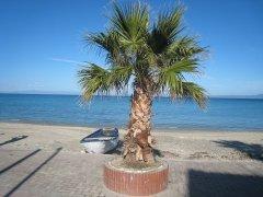 palma-pored-mora.jpg